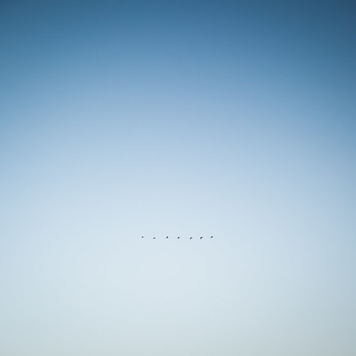 above blue winter light sunset sky white abstract cold color bird nature silhouette munich landscape evening flying glow bright snapshot smooth bluesky lookup clear naturereserve gradient minimalist canoneos5dii canon2470mm28ii