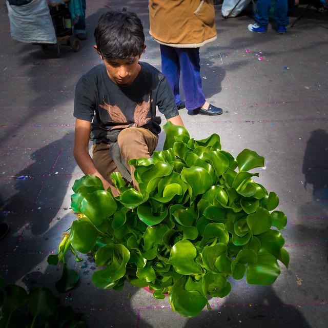 El vendedor de Jacintos / Water Hyacinths Seller (Mexico City. Gustavo Thomas © 2015)