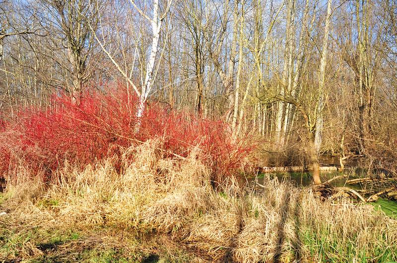 Ludwigshafen Maudacher Bruch Naturlandschaft Foto Brigitte Stolle
