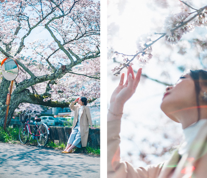 4.Roaming Under The Cherry Blossoms.