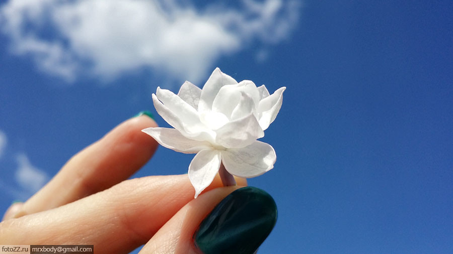 09-LilacGarden
