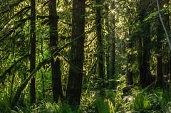 _IGP0063.PEF Wildwood Cascade Streamwatch Trail