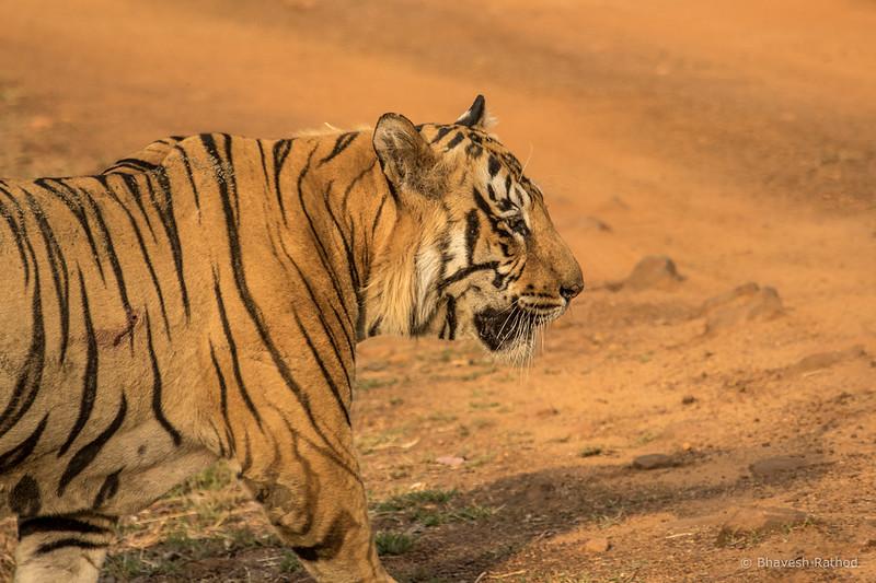 Namdeo - Tadoba Andhari Tiger Reserve
