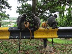 Bukit Melawati, Malaysia