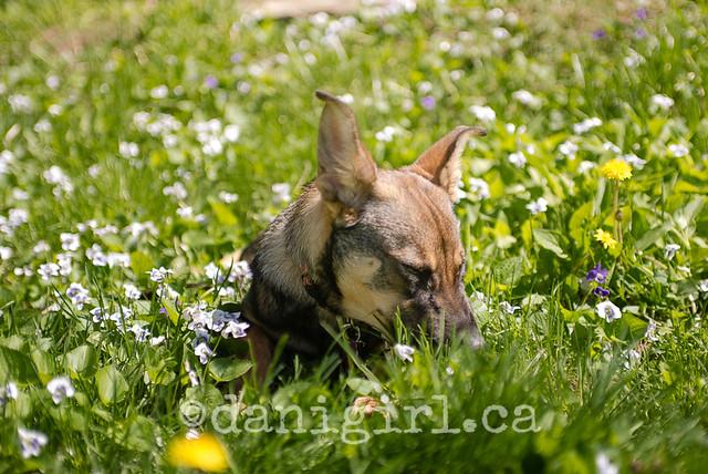Bella in the flowers