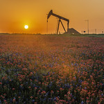 Texas Wildflowers, April 2013, Sunrise