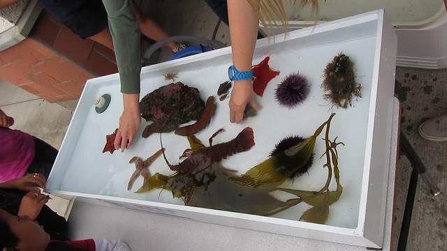 MVI_9302 sea creatures Oceans Alive Reef Isla Vista School Science Night 25s