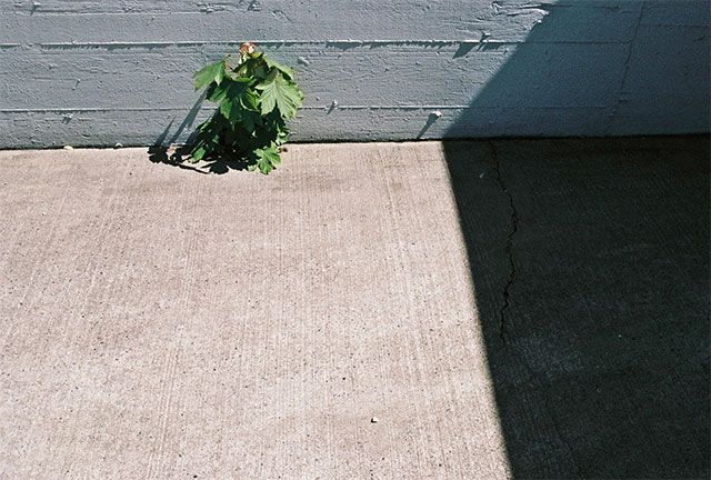 janice_wong_plant_shadow