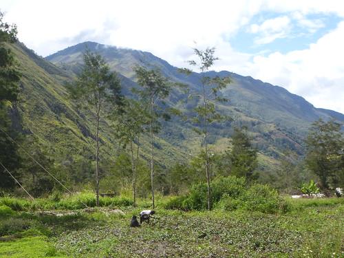 Papou13-Wamena sud-Sugokmo (69)