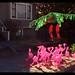 Flamingos by efo