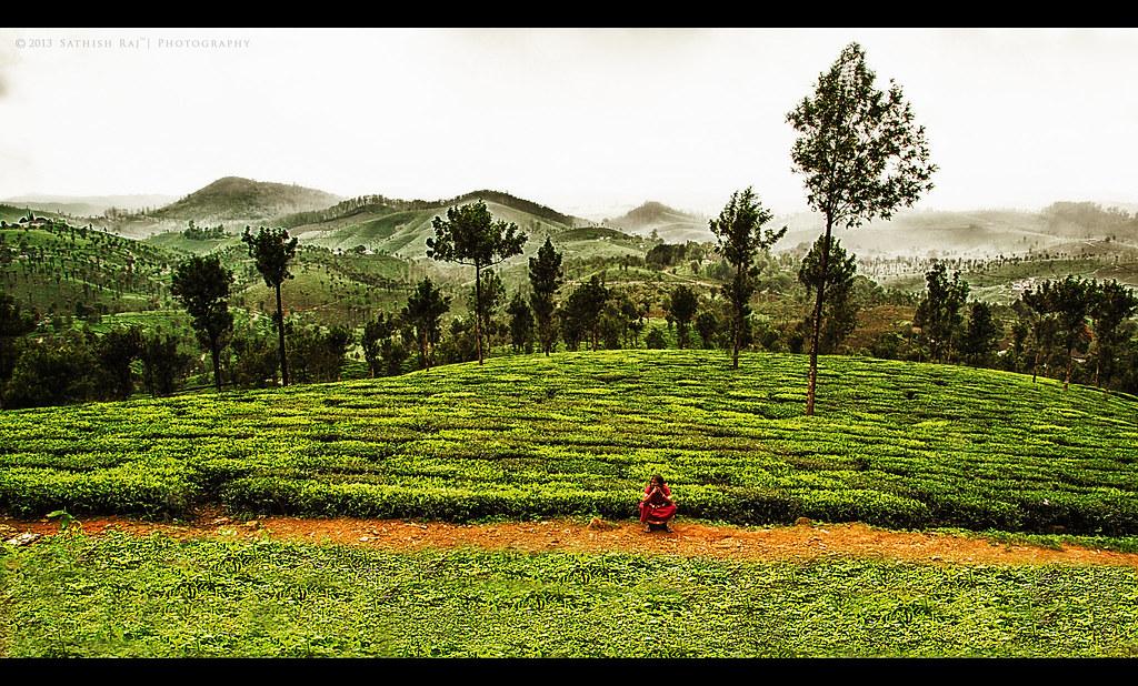 Valparai Landscape!