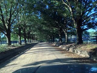 Windsor Road in Aiken