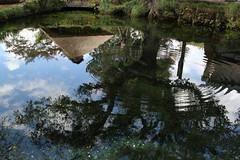 Pond like a mirror
