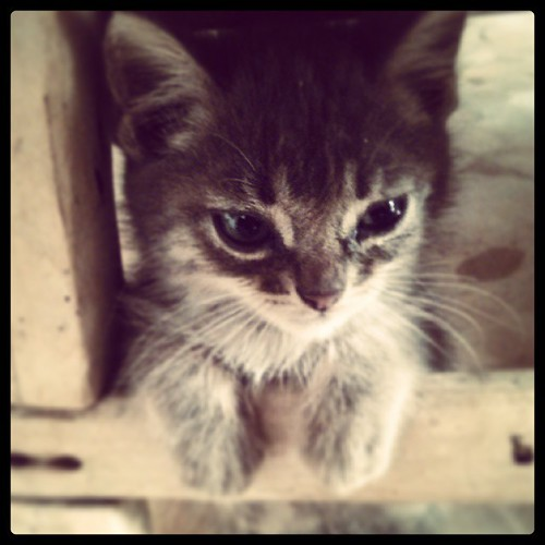 Miau!!