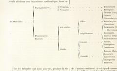 """British Library digitised image from page 904 of """"Dictionnaire des sciences anthropologiques ... publié sous la direction de A. Bertillon, Coudereau, A. Hovelacque, Issaurat [and others], etc"""""""
