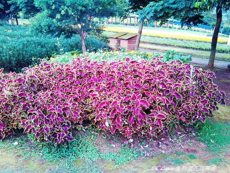 nEO_IMG_2012-05-27 17.26.21