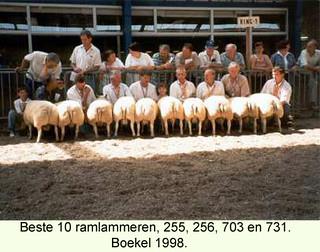 Ramlammeren 255 - 256 - 703 en 731 - 1998