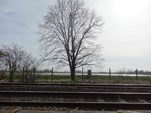 057 - Tracks, tree and Reservoir