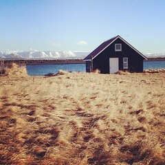 A house on a golden field. Snowy earth-wrinkles in the distance. Sea in-between. Damn, I love Iceland.