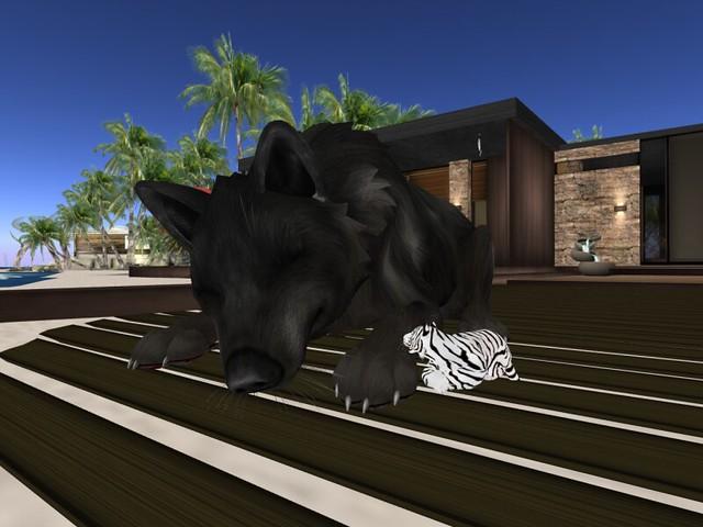 Tiny Tiger meets BIG Wolfie
