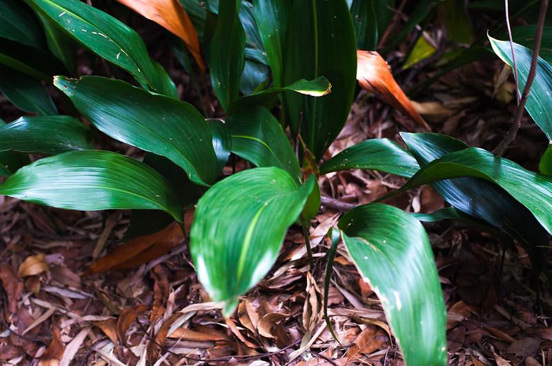 Foliage-9