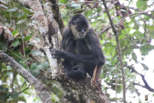 Zoo Karibikinsel Belize 19.11.2014 20