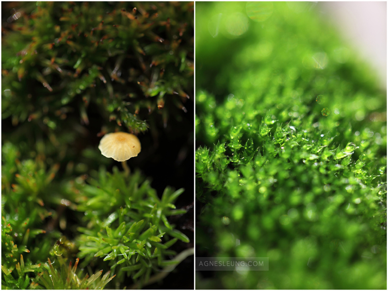 moss-at-home2