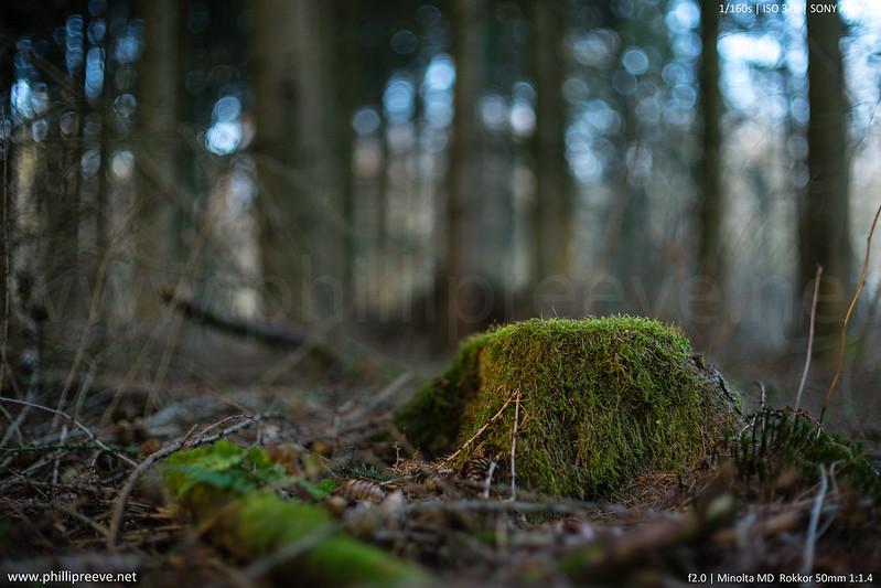 Minolta MD 50mm 1:1.4 @f/2