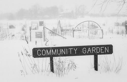 bw eastbrunswick garden landscape nj snow snowy winter newjersey unitedstates