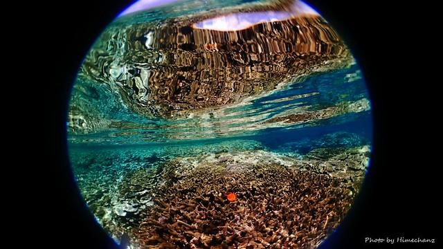 浅場のサンゴ♪