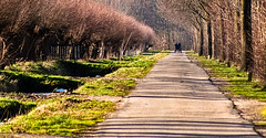 Old road along the Amsterdam-Rhine canal