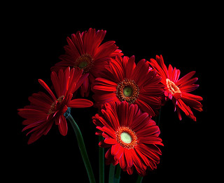 Red Flowers (studio play)