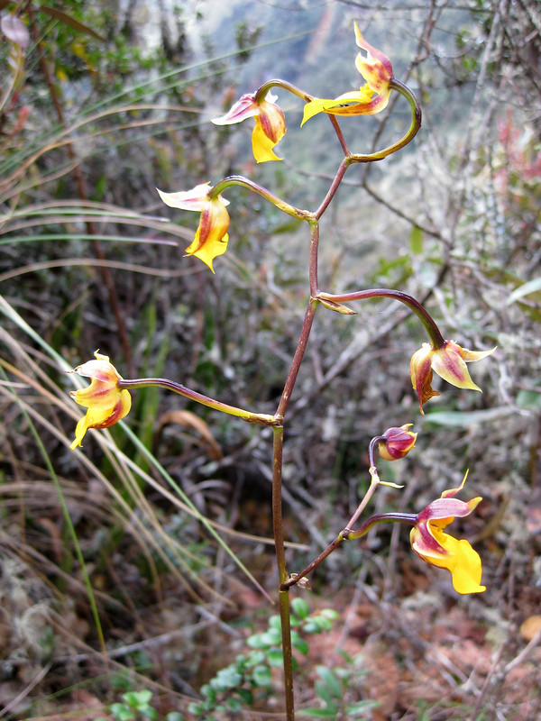 We were amazed by the hundreds of different orchids we encountered alongside the trail.