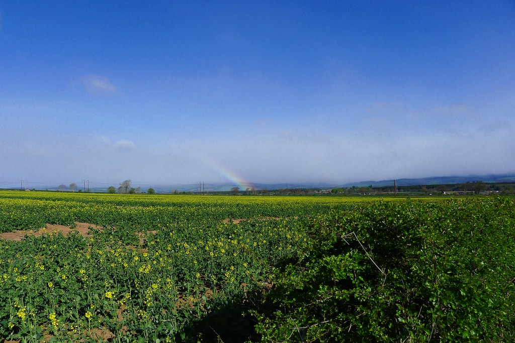 Rainbow over the fields