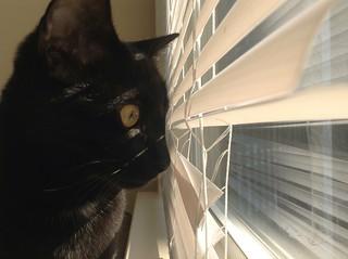 Martha Kitten peeking out the window