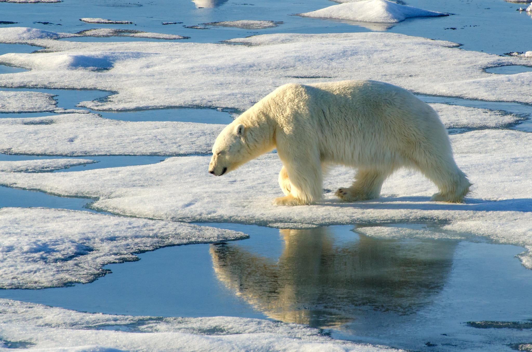 photo Arctique retina Flickr