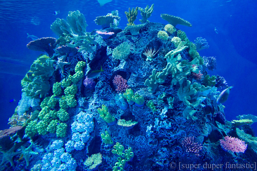 Den Bla Planet - Coral