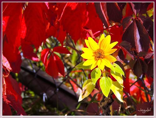 Couleurs d'automne - Fall Colors