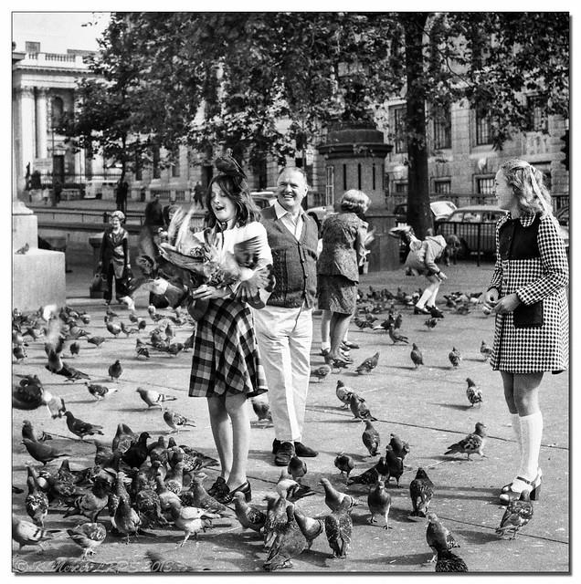 Pigeon-Peril