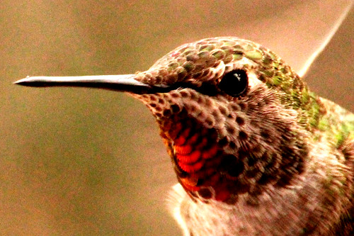 132302-2.jpg by Robert W Gilcrease