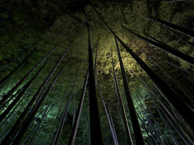 鷲峰山高台寺 竹林ライトアップ(2)