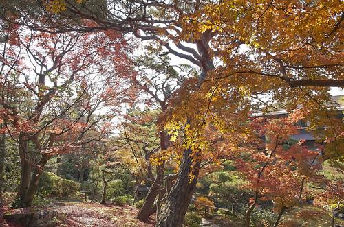 【写真】紅葉 : 白河院