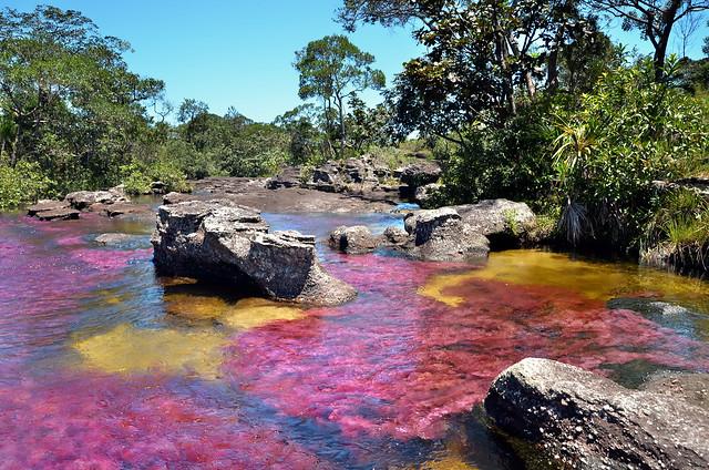 Caño Cristales, el río de los colores.