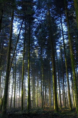 france forêt fra
