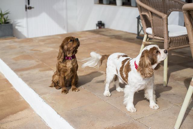Ibiza living: Mauricio & Bradley, Coco Safari 8