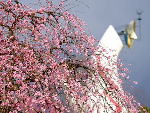 "Expo '70 Park 2014.3.7 (12) Ume tree and ""Tower of the Sun"""