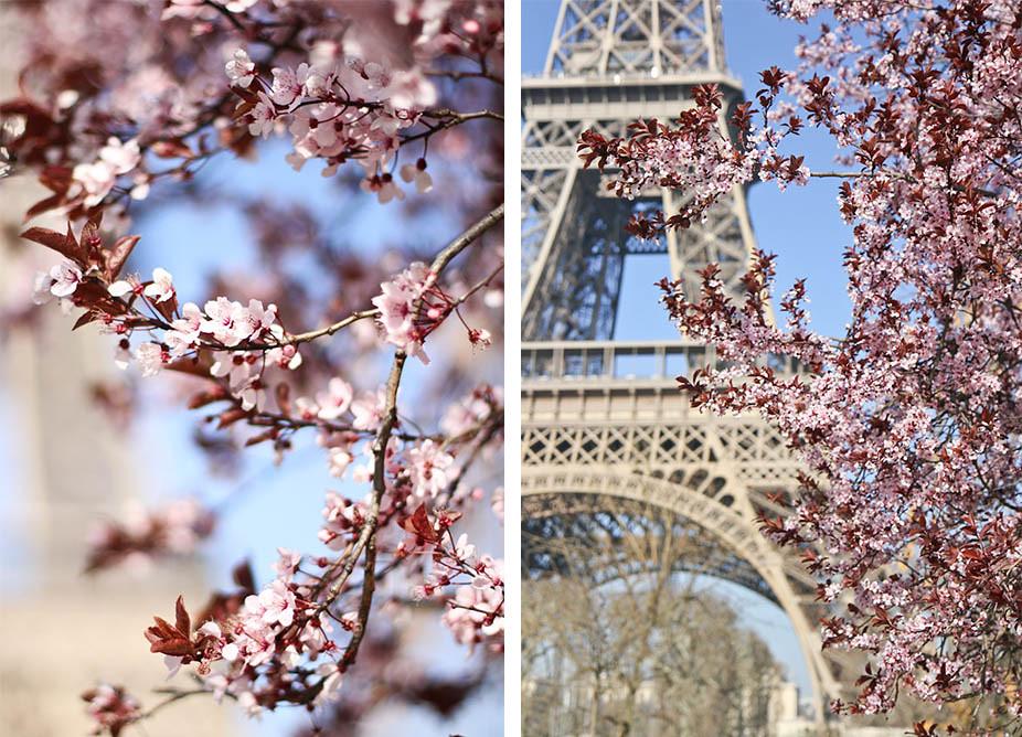 Cherry blossom in the Champ de Mars-8.jpg