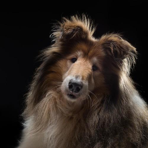Dogs Trust - Mack
