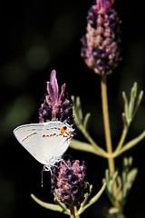 Butterflies & Moths.