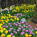 Tulip and daffodil garden in grove